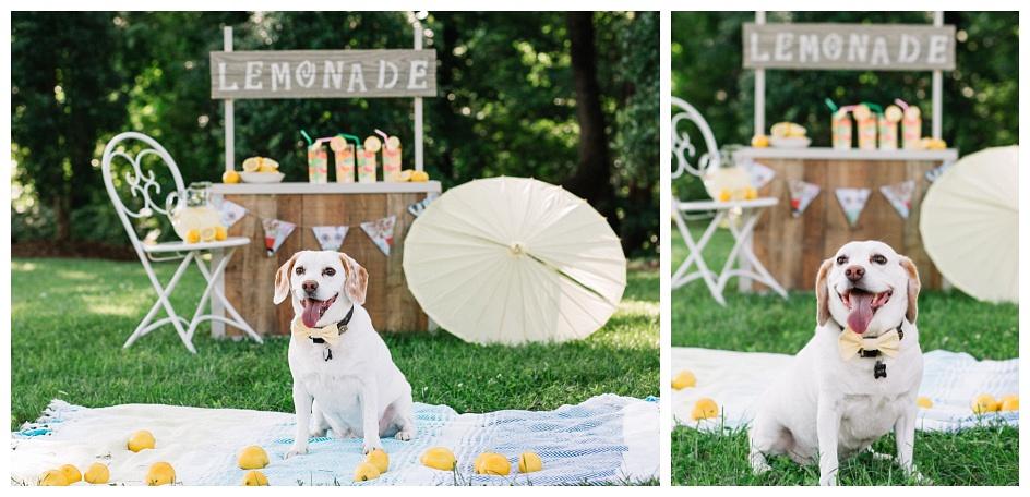Lemonade Stand, Marion NC Photographer, Lemon Beagle, dogs, best friend, Lake James photographer, Family photographer, Asheville
